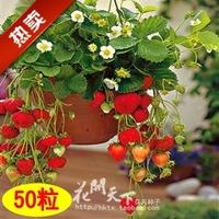wholesale Bonsai strawberry seeds four seasons of edible balcony multicast flower fruit seed 150 pcs