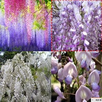 Free Shipping Hot Selling 100PCS Wisteria Flower Seeds15 varieties A variety colors