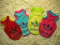 Free Shipping 2pcs/lot 4 colors dog mesh vest pet clothes teddy poodle vest dog breathable summer shirt,XS,S,M,L