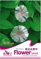 5 Pack 100 Seed Morning Glory Seeds Pharbitis nil Beautiful Garden Flower A125