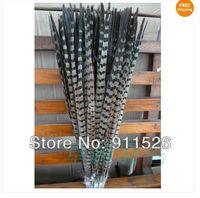 Free Shipping 100pcs 45-50cm 18-20 inches natural pheasant feather tail Ringneck pheasant feather tail