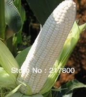 White Corn Seeds Vegetables Seed Waxy Corn Seeds Home DIY 100Pcs/Bag