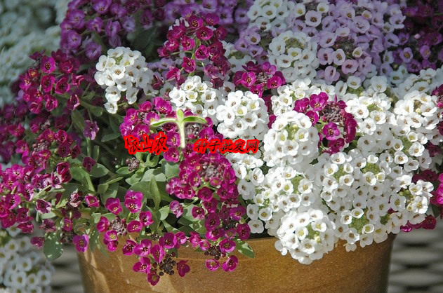 The new special offer. Type flower seeds 1 50 nursery soil 30 2 200(China (Mainland))