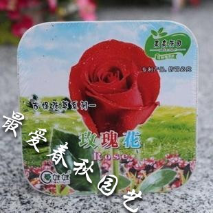 2013 the new special offer. Boxed series rose flowers and plants seeds mini box high quality seeds(China (Mainland))