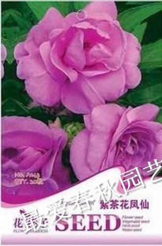 2013 the new special offer. Flower seeds flower seeds seed bonsai camelias impatiens seeds four seasons(China (Mainland))