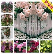 plant pot promotion