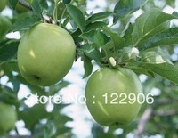 SE028  80 Pieces Heirloom Green Apple Seeds  Plus a Mystic Free Gift,  Free shipping