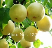 SE018 Sweet Pear Seeds, Delicious Flavour, Organic, 100 Pieces Pear Seeds With Mystic Gift, Free shipping