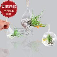 Air pineapple usnea plant set air purification indoor aerobic bonsai radiation-resistant plants