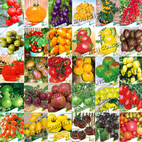 30 PACKS DIFFERENT KINDS OF TOMATOS * MORE THAN 600 SEEDS * ORIGINAL PACKING * NON-GMO HEIRLOOM TOMATO SEEDS * GARDENING PLANTS