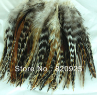 Lot 50 Natural Feather of Plymouth Rock Chicken 6inch to 8inch 10cm to 18cm