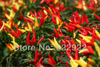 58 The Most Spicy Pepper Chili chilli Seeds in China Hot taste vegetable Food Bonsai Home Gatden Backyard  SHIPS FREE!