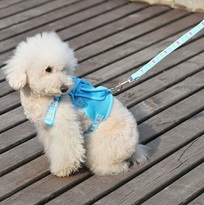 Pet chest suspenders dog with a backpack chest suspenders supplies(China (Mainland))