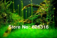 22 Species Water Aquatic Plant Seed aquarium fish tank plant seed Easy to grow Waterweeds 20pcs for each kind total 440pcs/lot