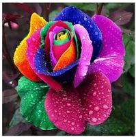 100pcs New Multi-color Rainbow Rose Seeds Chinese Rose Flower Seeds Home Gardening Wholesale, IZ0002
