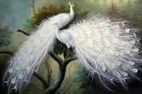 Free shipping hand-painted oil painting beautiful white peacock