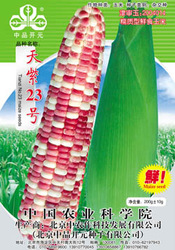 Seeds sweet cephalostachyum health food 100g(China (Mainland))