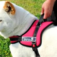 2014 New Gold luxury wellsore chest suspenders pet dog collar satsuma