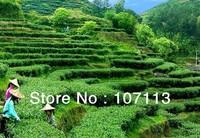 500g Anxi Tieguanyin tea oolong tea fresh+free shipping