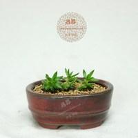 Purple ceramic coarse pottery colored glaze basin fleshier plant flower pot 10cm jade 4