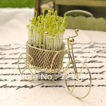diy plants price