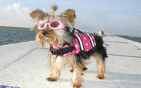 Dog Life Jacket Vest Outward Hound Pet Saver Dog beach bathing suit