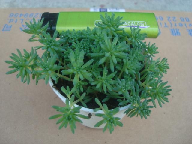 Fleshier plant meat bonsai radiation-resistant indoor flowers plants(China (Mainland))