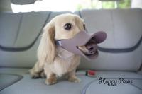 Free shipping novelty duckbilled dog muzzle Stop bite bark Teddy bear pug chihuahua small dog Dog training product Pet accessory