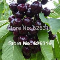 60pcs/lot Black Sweet Cherry Seed Prunus Serotina Cherry Fruits Seed DIY Home Garden Plant Outdoor House Plant