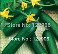 SE1030 Free shipping! 100 Seeds Heirloom Healthy Organic Vegetable Holland Mini Cucumber Seeds