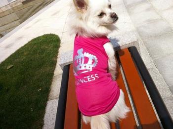 10 pieces/1 LOT Small Pet clothing Dog CAT PUPPY Clothes  T Shirt Vest Type XS S M L ROSE CROWN