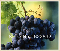 Free Shipping Blue Grape Rare 100 Seeds Fruit  Seeds * Very Beautiful