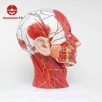 Half head model