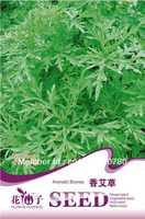 Free Shipping Aromatic Blumea Seeds
