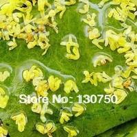 Lose Weight Tea  Kwei lotus leaf tea natural herbal tea detoxified flower tea  Free shipping