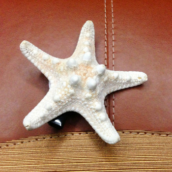 2013 New Design Free Shipping Resin Star Design Alloy barretes Women Headhair Headwear For Lady