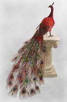 Red male  peacock 60 inch long simulation Lucky bird for room decoration free shipping