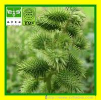 Top Quality Cocklebur Fruit Extract/Fructus Xanthii extract/XanThium sibiricum P.E