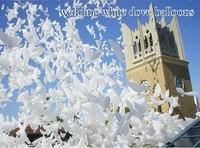 Free shipping 100pcs/lot white Wedding dove Balloon Party decoration, biodegradable dove Balloon .