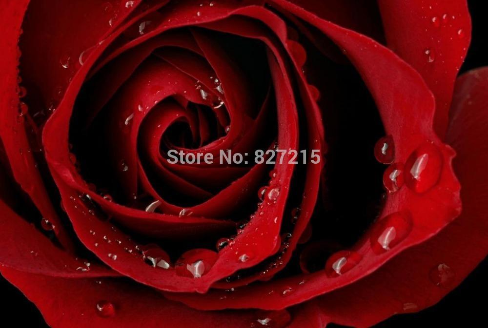 Потолочная плитка DELAI r/2833 1,5 /3,2 R-2833 Print Stretched Ceiling Films lacywear s7816 2833