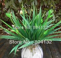 "Floral Accessories 34cm/13.39"" Length 6Pcs Artificial Flowers Simulation Chlorophytum Leaf Home Wedding Decoration"