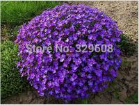 Free Shipping 3 Packs Of Violet Queen Seeds /1 Pack 40 Seeds Aubrieta cultorum Seed Beautif Flower A163