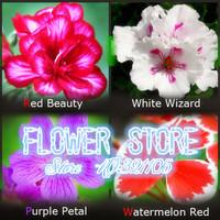 Цветение 20 шт семена каждого цвета