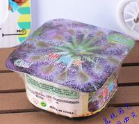 Weird flowers garden - Venus flytrap, fly nemesis, eating grass flies - box + fertilizer + seeds