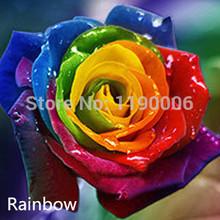 rainbow rose price