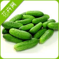 1 Pack 20 Seeds Japan Cucumber Seeds