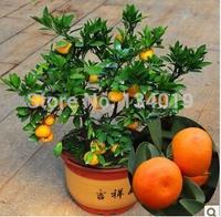 100pcs/bag, Balcony patio potted fruit trees planted seeds, kumquat seeds, orange seeds, tangerine, citrus,
