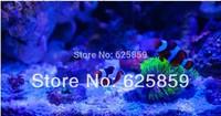 free shipping 10pcs  10W LED Royal blue   440-445nm High Power 180-200LM 1050MA 9-11v  LED light  For DIY