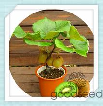 wholesale potted plant