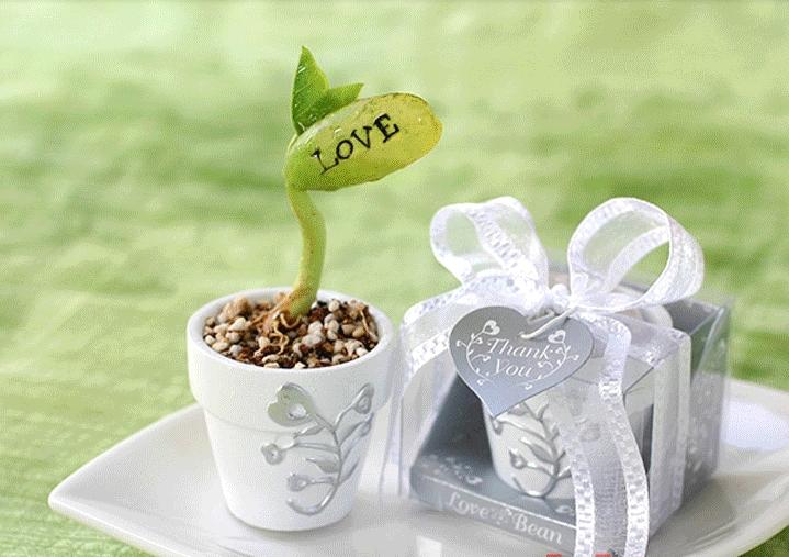 Magic Growing Message Beans Seeds Magic Bean White English Magic Bean Bonsai Green Home Decoration(China (Mainland))